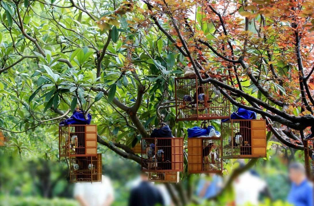 北京人的遛鸟