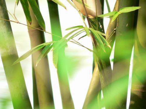 《玉屑集》--竹风拂心