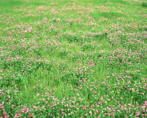 百花齐放的春天