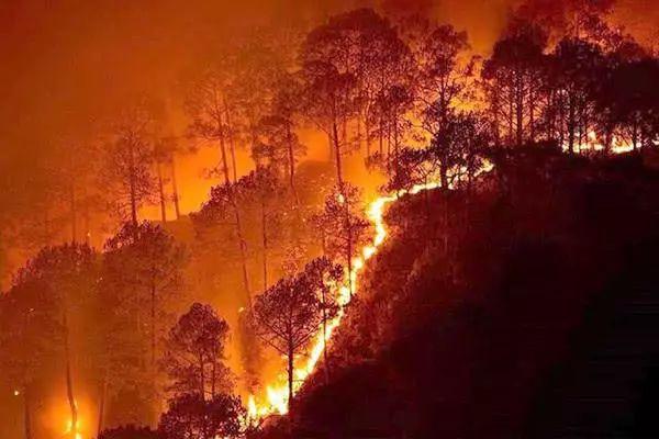 森林大火中的兔子 | 小说