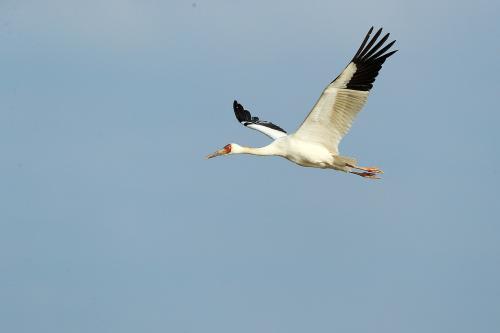 告诉他们,我乘白鹤去了
