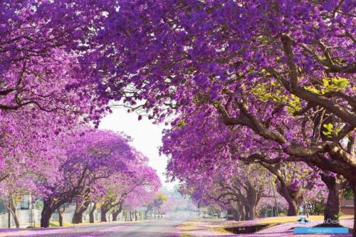 紫色的温柔