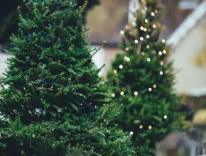 圣诞节松树